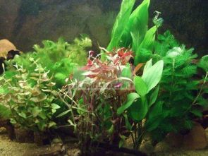 40 Aquarium Pflanzen Mix Wasserpflanzen Pflanzenset Bundpflanzen Pflanzen