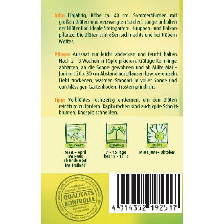 für ca 100 Pflanzen Kapkörbchen Tetra Goliath  Samen Steingarten Sommerblume