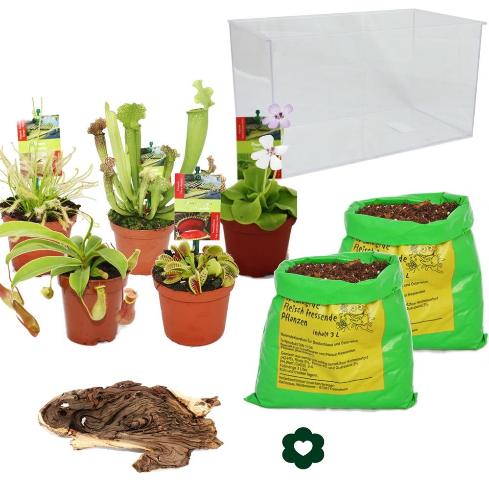 fleischfressende pflanzen aquarium zum selberpflanzen gro. Black Bedroom Furniture Sets. Home Design Ideas