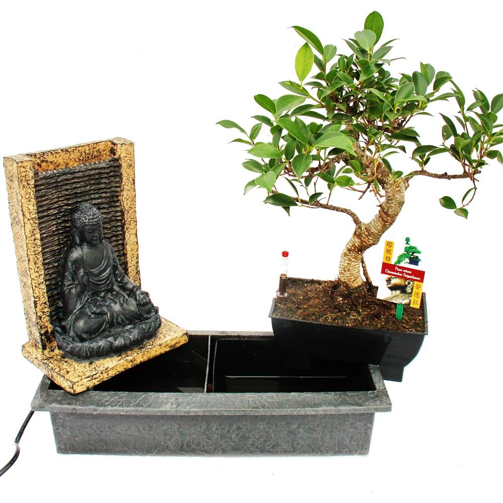 bonsai chinesischer feigenbaum mit buddha brunnen 6 7 jahre alt ebay. Black Bedroom Furniture Sets. Home Design Ideas