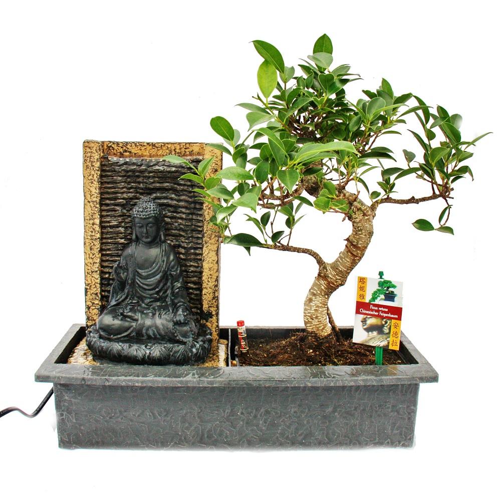 bonsai chinesischer feigenbaum 8 9 jahre mit buddha brunnen ebay. Black Bedroom Furniture Sets. Home Design Ideas