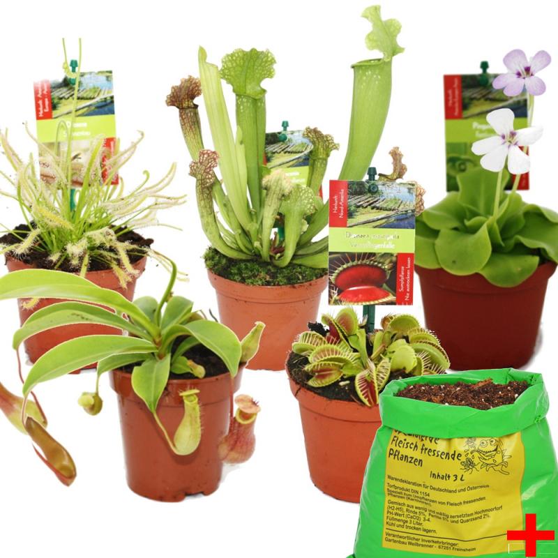 starter set fleischfressende pflanzen 5 pflanzen erde. Black Bedroom Furniture Sets. Home Design Ideas