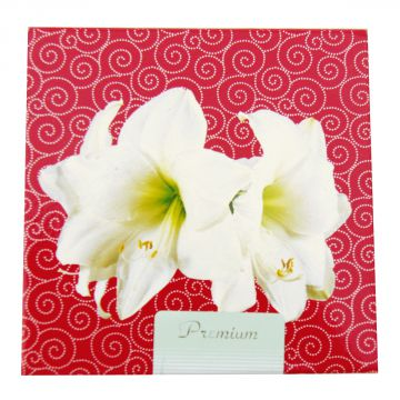 amaryllis intokazi in geschenkdose artist hippeastrum 1 zwiebel ebay. Black Bedroom Furniture Sets. Home Design Ideas