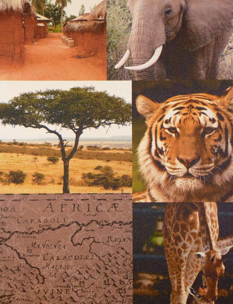 les aventures tapeten 51137508 tapete afrika wildnis euro pro m ebay. Black Bedroom Furniture Sets. Home Design Ideas